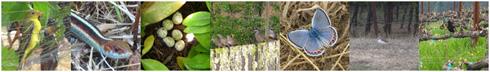 vineyard birds